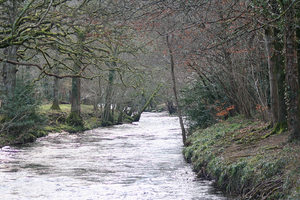 Dunsford - The River Teign as it passes through Dunsford Nature Reserve
