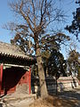 Temple of Mencius - P1050874.JPG