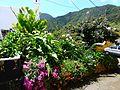 Teneriffa – Mercedeswald - Las Carboneras - panoramio (3).jpg