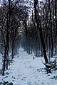 Texel - Kwekerijweg - Winterview ENE.jpg