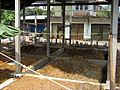 Thai House Formwork Removed 2.JPG