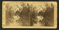 The Diamond Pass, Oklawaha River, Fla, from Robert N. Dennis collection of stereoscopic views.png