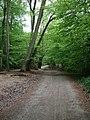 The Drove Road in Oaken Grove - geograph.org.uk - 1291220.jpg