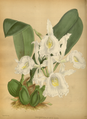 The Orchid Album-01-0044-0014.png