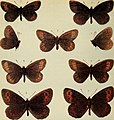 The butterflies of the British Isles (1906) (20502894242).jpg