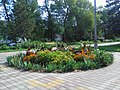 The flower bed on the boulevard. September 2013. - Клумба на бульваре. Сентябрь 2013. - panoramio.jpg