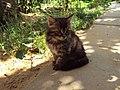 The nice kitten.jpg