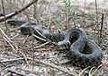 The snake.jpg