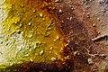 Thermal pool color gradient.jpg