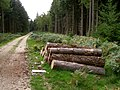 Timber stack in Broomy Inclosure, New Forest - geograph.org.uk - 236216.jpg
