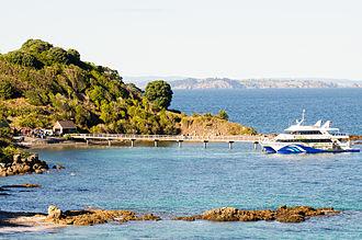 Tiritiri Matangi Island - Tiritiri Matangi wharf and ferry, day-trip passengers have just disembarked