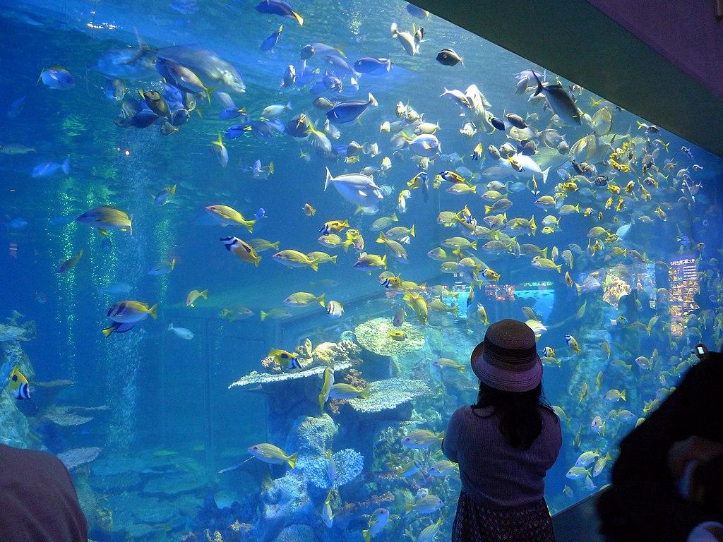 Toba Aquarium 1