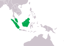 Tomistoma schlegelii Distribution.png