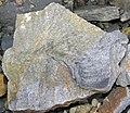 Trace fossil in Vinton Member siliciclastics (Logan Formation, Lower Mississippian; Rt. 16 roadcut northeast of Frazeysburg, Ohio, USA) 1 (32587513364).jpg