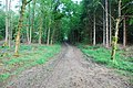 Track to Nagshead Lodge - geograph.org.uk - 1326564.jpg