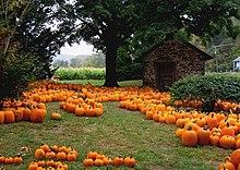 pumpkin wikipedia