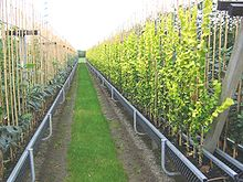 A Tree Nursery Using Gutters To Decrease Growing Costs