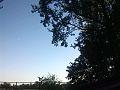 Treess.jpg