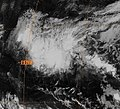 Tropical Storm Paka in the Central Pacific.jpg