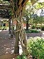 Turnbull Wine Cellars, Oakville, California, USA (8086755084).jpg