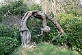 Twisted Tree - geograph.org.uk - 379124.jpg