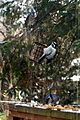 Two Blue Jays, Hairy Woodpecker 0088 (15789992272).jpg