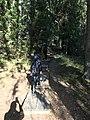Tyresta forest 01.jpg
