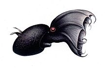 Vampyroteuthis illustration.jpg