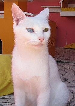 Van Cat 1 2015.JPG