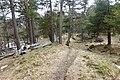 Vangfeltet, Vang Burial Site, Norway's largest burial field, iron-Viking age (gravfelt fra jernalderen), Oppdal, Trøndelag. Skjørdøla, pine trees, foot path, spring, etc. 2019-04-25 409.jpg