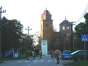 Veliko Središte - A street in the village, the Orthodox church, and the typical motif from Vojvodinian villages: cows going home after daily pasture.
