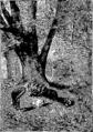 Verne - P'tit-bonhomme, Hetzel, 1906, Ill. page 171.png