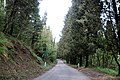 Via degli Dei, Fiesole, via S. Clemente 01.jpg