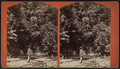 View of a man standing by stream and looking up at trees, by D. L. Avery.png