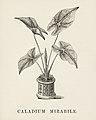 Vintage illustrations by Benjamin Fawcett for Shirley Hibberd digitally enhanced by rawpixel 106.jpg