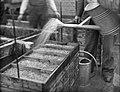 Visserij, viskwekerijen, montee, sproeien, arnhem, Bestanddeelnr 164-0381.jpg