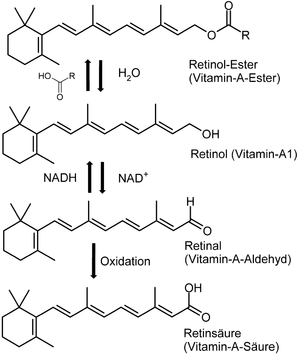 Synthese des Vitamin A