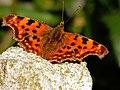 Vlinder in de tuin.jpg