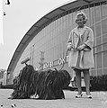 Vrouw terwijl ze een Hongaarse herdershond van het Puli-ras toont, Bestanddeelnr 918-3858.jpg