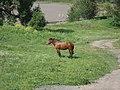 Vyazovenka - Horse - 05.jpg