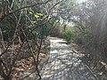 Walkway inside Adyar Eco Park.jpg