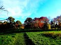Warner Park during Fall - panoramio.jpg