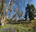 Warren Gorge campground - panoramio.jpg