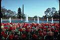 Washington Monument WAMO9856.jpg