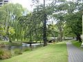 Weeping Willows along the River Avon in Christchurch, NZ (4279371531).jpg