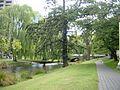 Weeping Willows along the River Avon in Christchurch, NZ (4279371531).jpg