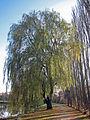 Weide Iphofen, 2.jpg