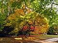 Westonbirt Arboretum - geograph.org.uk - 3338.jpg