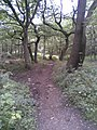 Wharncliffe Woods - geograph.org.uk - 1755917.jpg