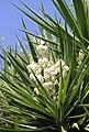 White Flowers (21663421612).jpg
